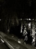 Sobre la costa del río...